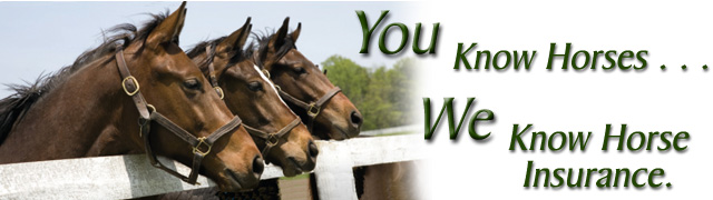 You know horses . . . we know horse insurance.
